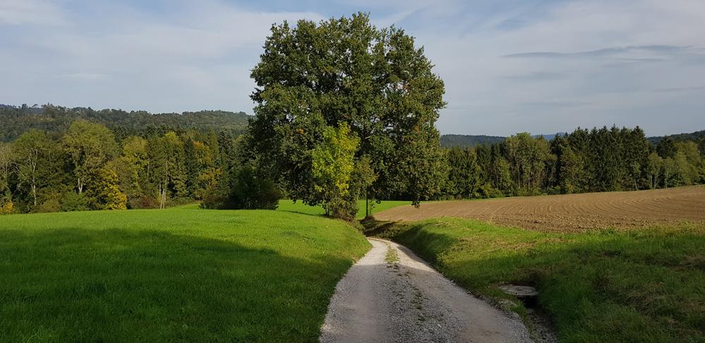 Natur 07